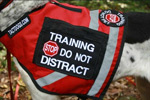 dog training vest